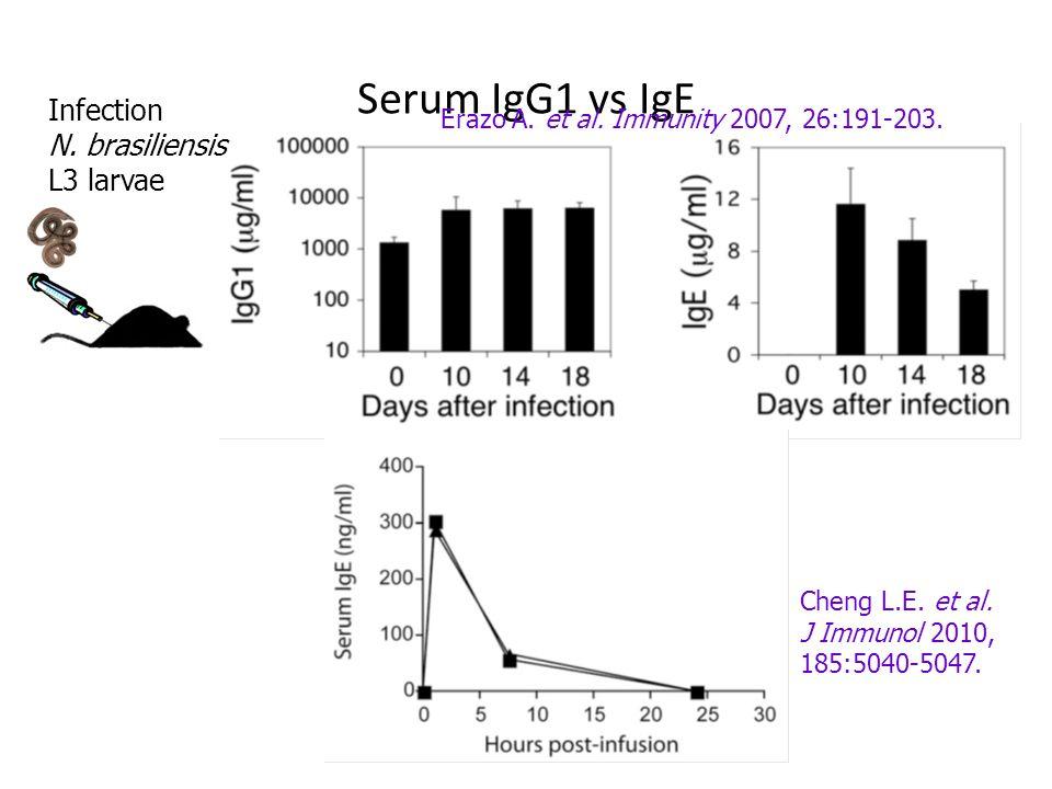 Serum IgG1 vs IgE Infection N. brasiliensis L3 larvae