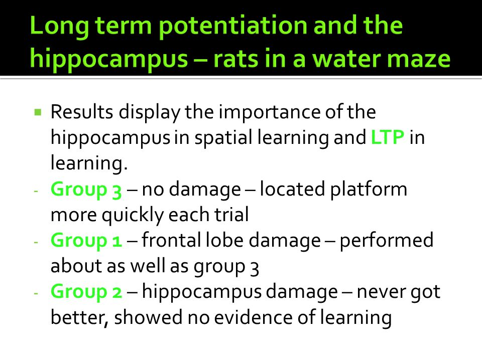 Long term potentiation and the hippocampus – rats in a water maze