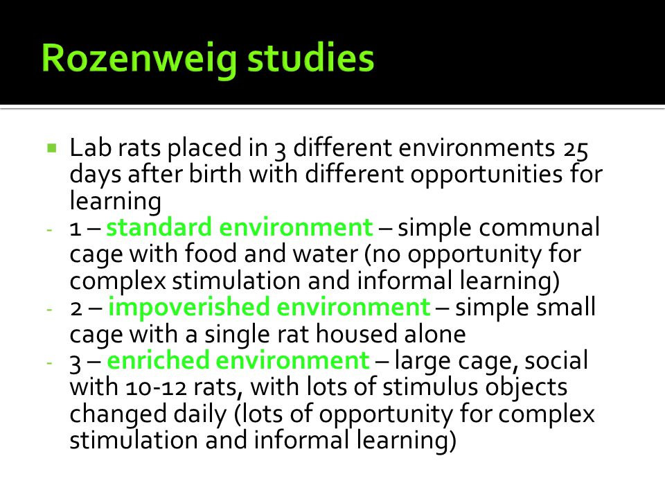 Rozenweig studies Lab rats placed in 3 different environments 25 days after birth with different opportunities for learning.