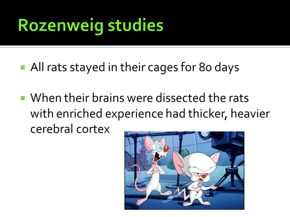 Rozenweig studies All rats stayed in their cages for 80 days