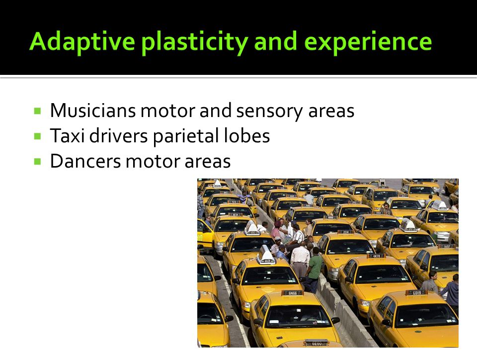 Adaptive plasticity and experience
