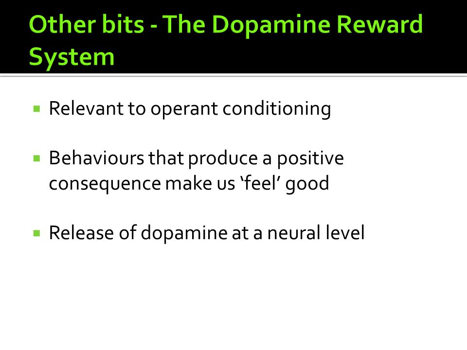 Other bits - The Dopamine Reward System
