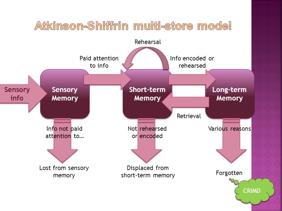 Atkinson-Shiffrin multi-store model