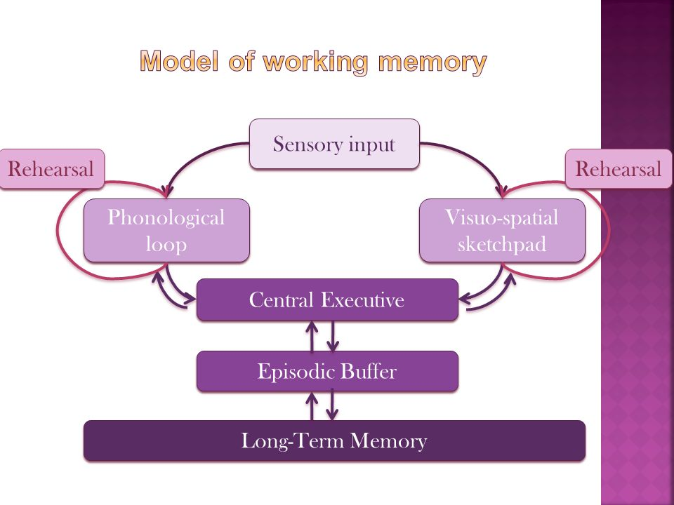 Model of working memory