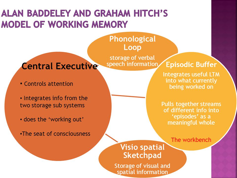 Alan Baddeley and Graham Hitch's model of working memory