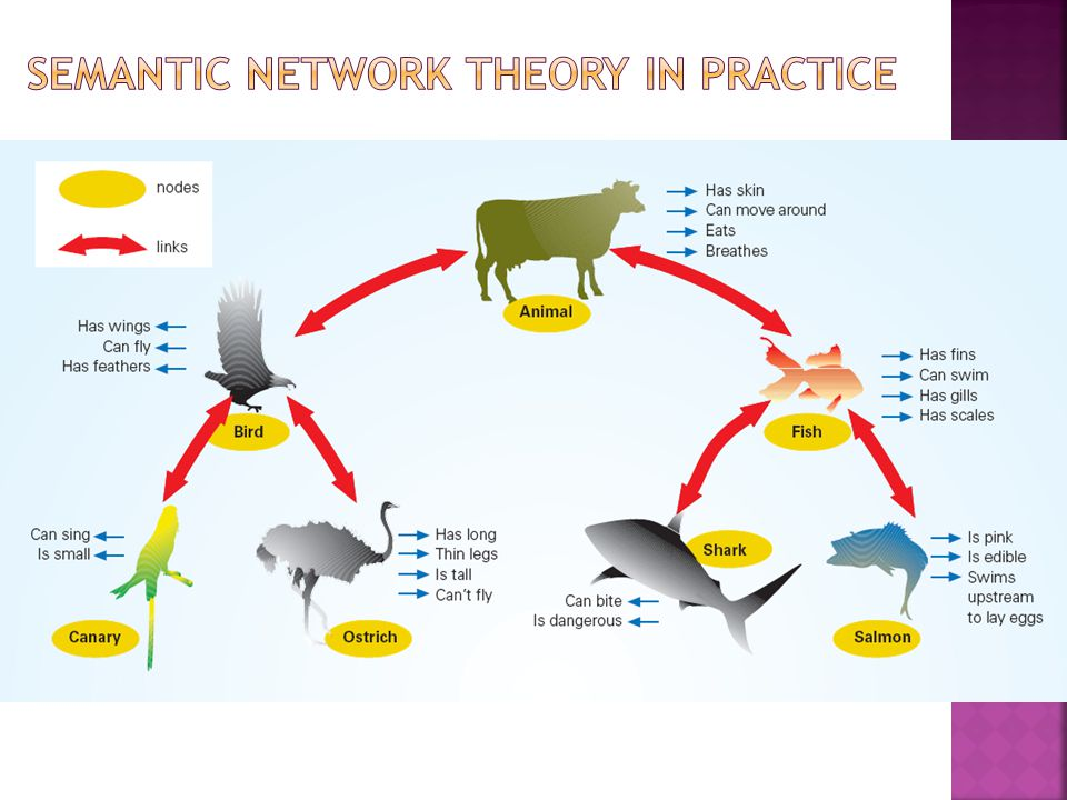 Semantic network theory in practice