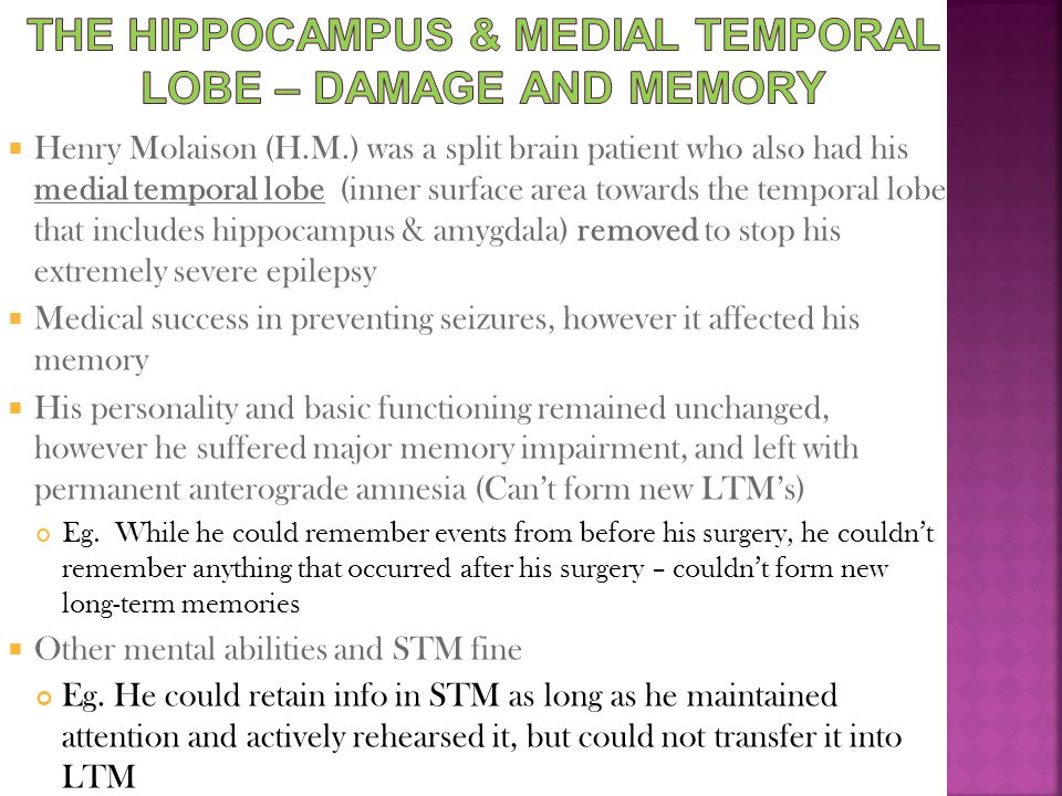 The Hippocampus & Medial Temporal Lobe – damage and memory