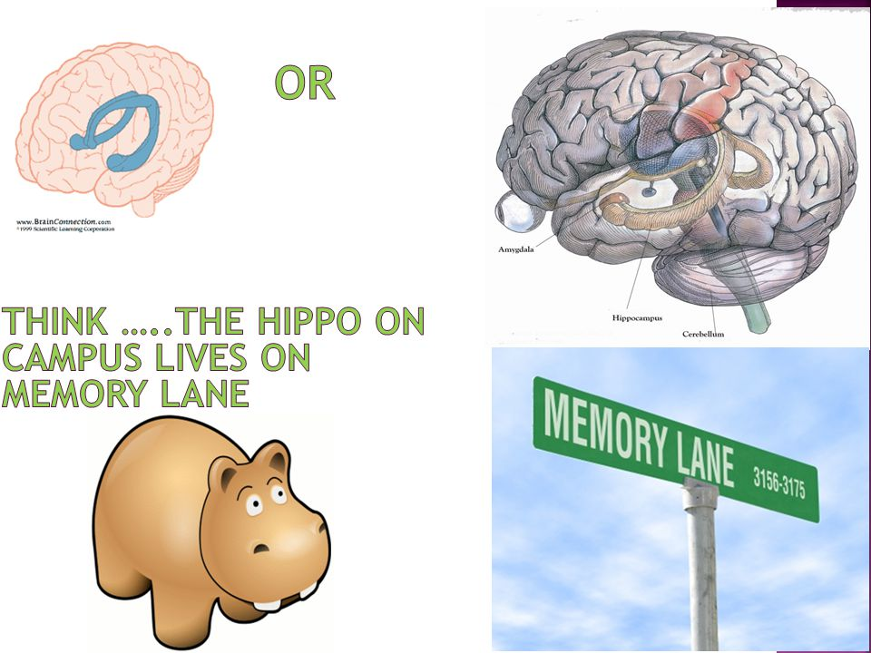 OR Think …..The hippo on campus lives on memory lane