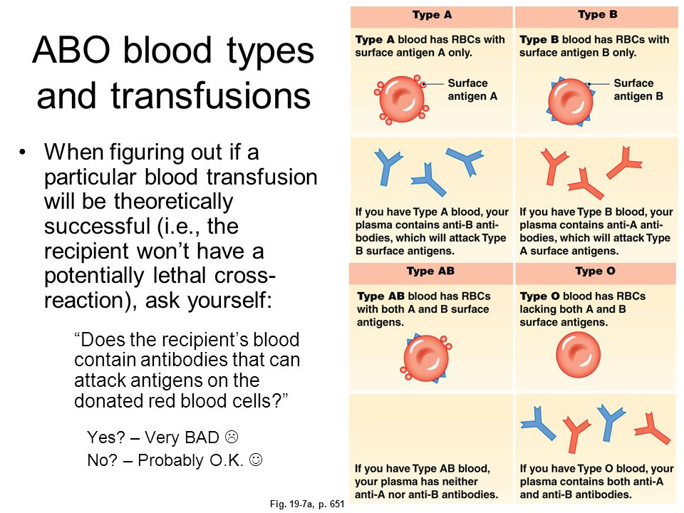 ABO blood types and transfusions