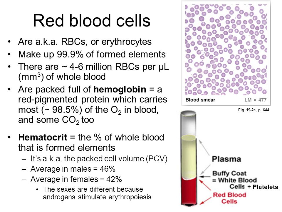 Red blood cells Are a.k.a. RBCs, or erythrocytes