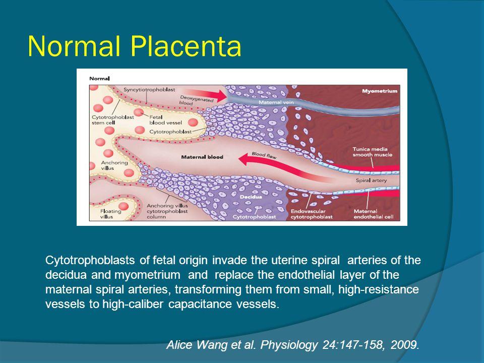 Normal Placenta