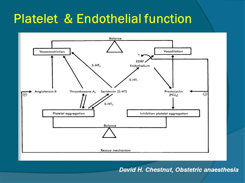 Platelet & Endothelial function