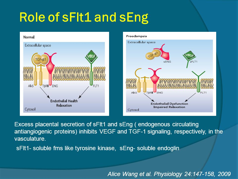 Role of sFlt1 and sEng