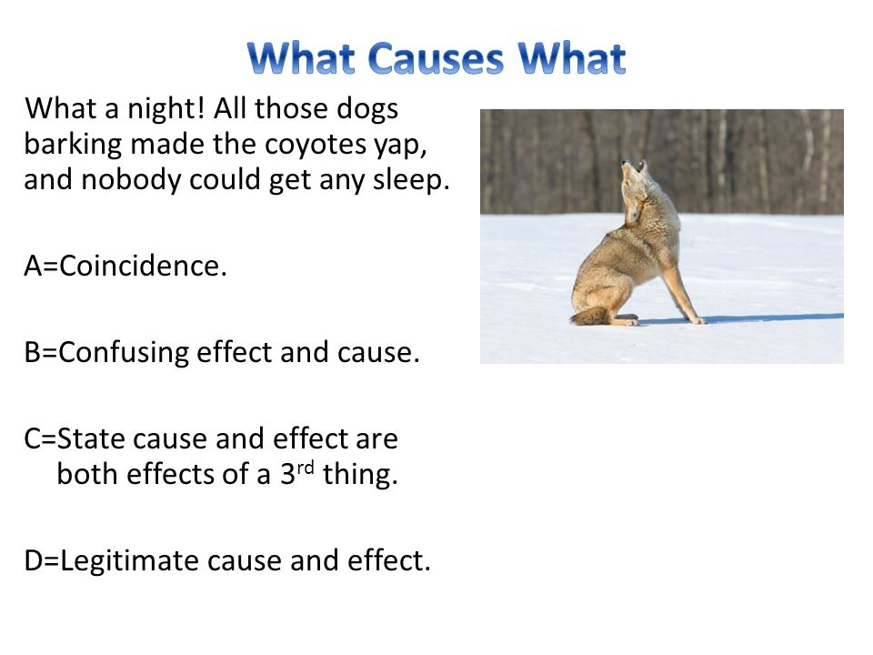 What Causes What What a night! All those dogs barking made the coyotes yap, and nobody could get any sleep.