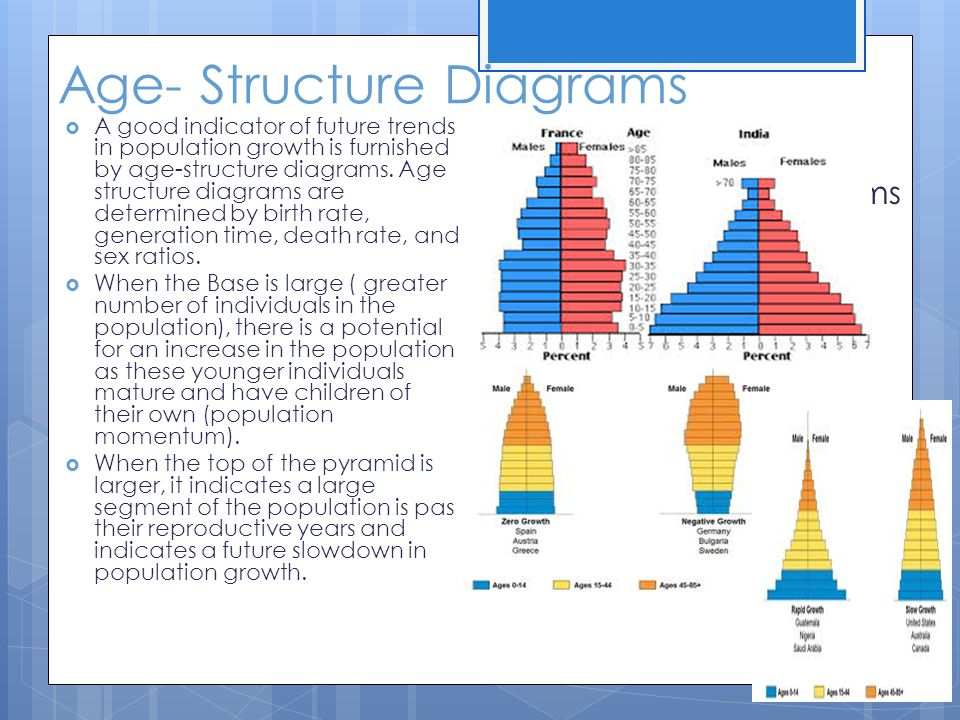Age- Structure Diagrams