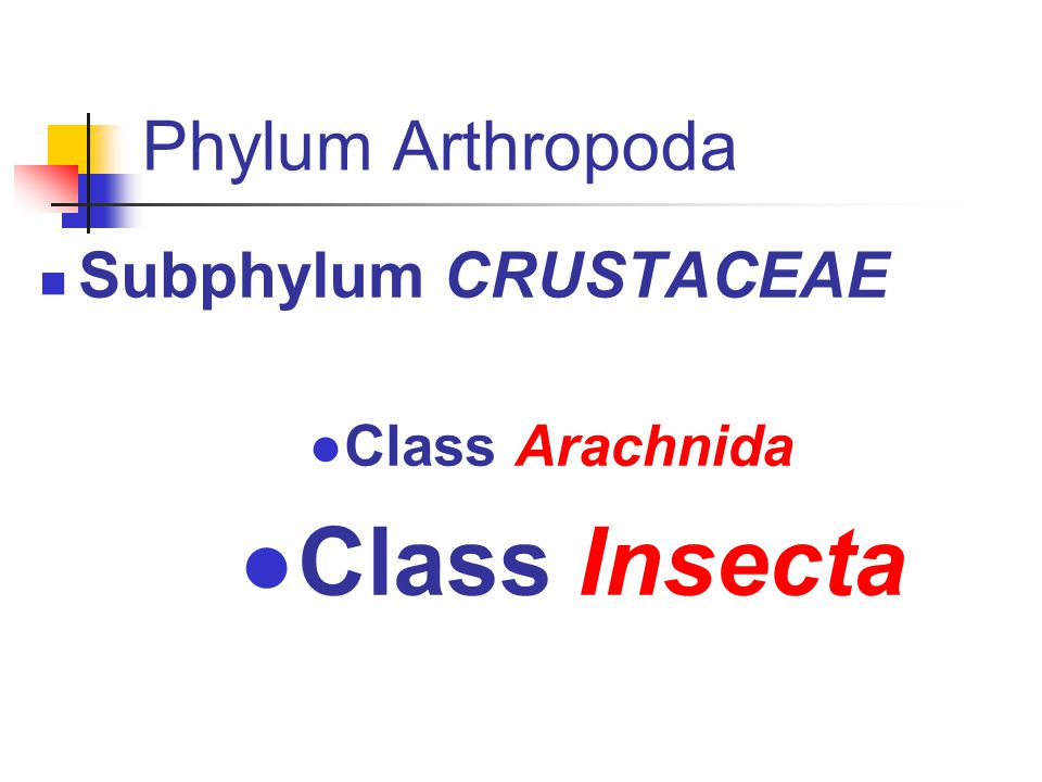 Phylum Arthropoda Subphylum CRUSTACEAE ●Class Arachnida ●Class Insecta