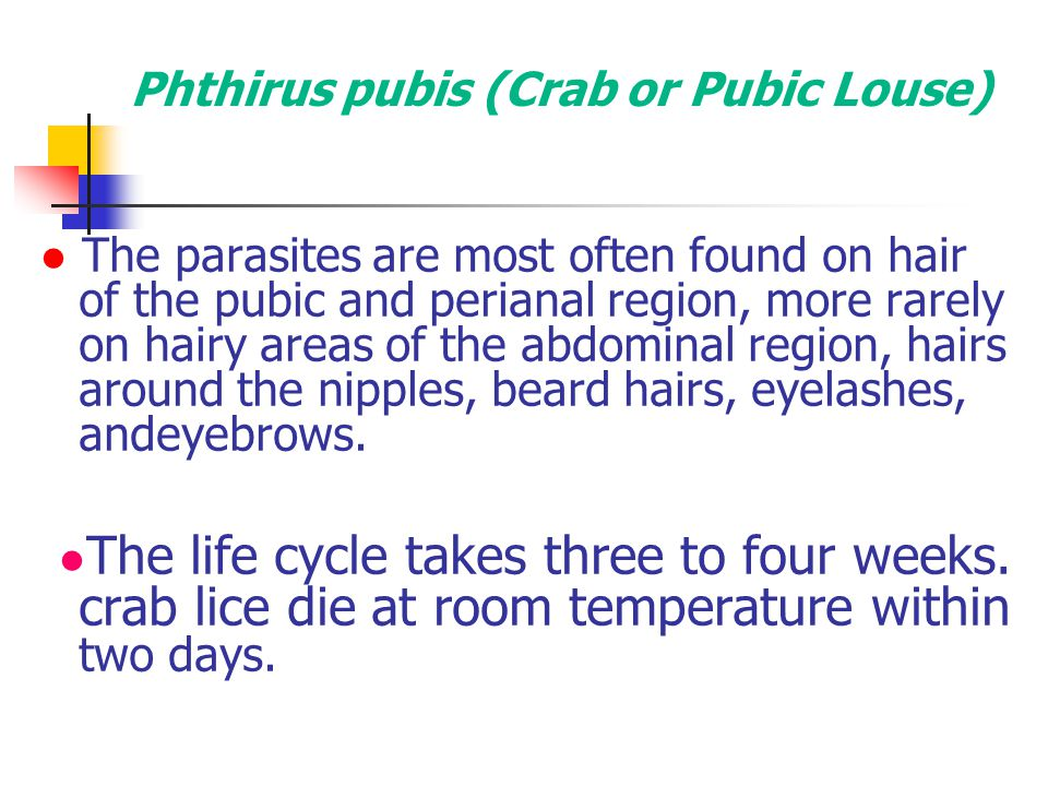 Phthirus pubis (Crab or Pubic Louse)