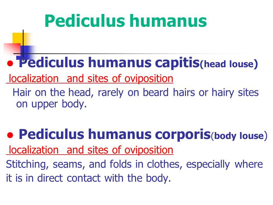 Pediculus humanus ● Pediculus humanus capitis(head louse)