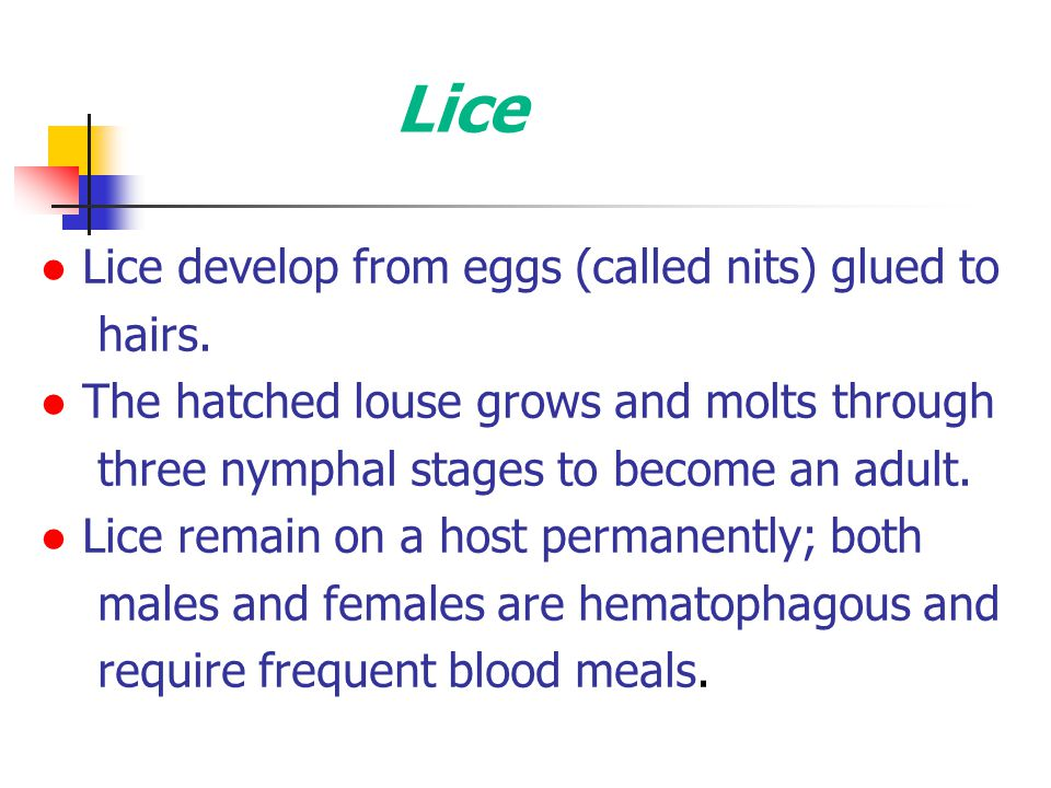 Lice ● Lice develop from eggs (called nits) glued to hairs.