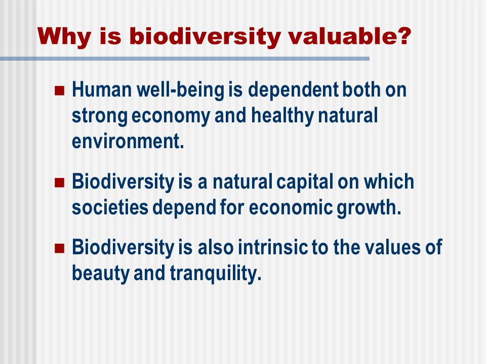 Why is biodiversity valuable