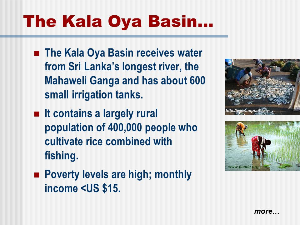 The Kala Oya Basin… The Kala Oya Basin receives water from Sri Lanka's longest river, the Mahaweli Ganga and has about 600 small irrigation tanks.