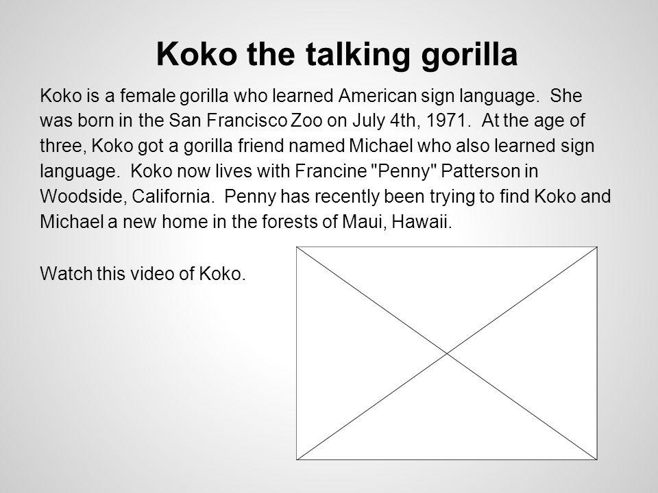 Koko the talking gorilla