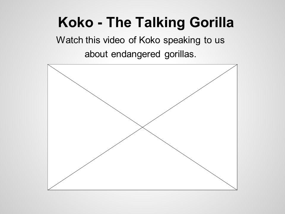 Koko - The Talking Gorilla