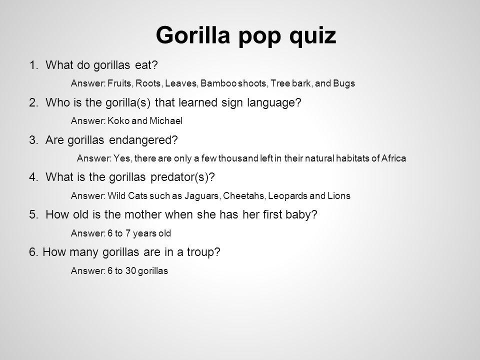 Gorilla pop quiz 1. What do gorillas eat