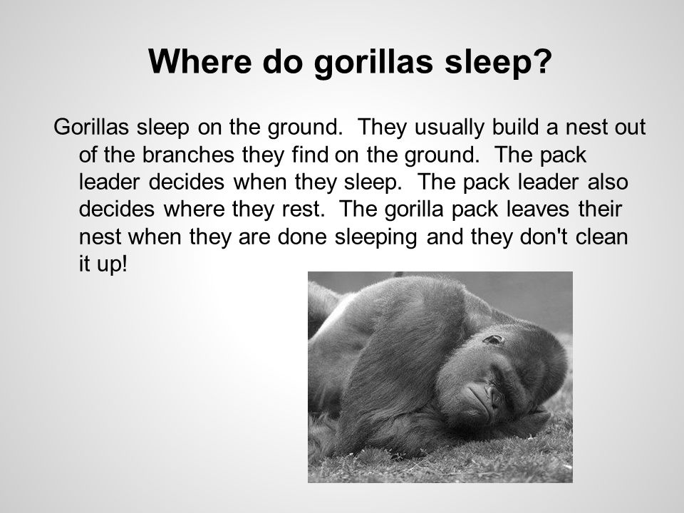 Where do gorillas sleep