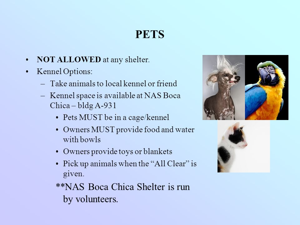 PETS **NAS Boca Chica Shelter is run by volunteers.