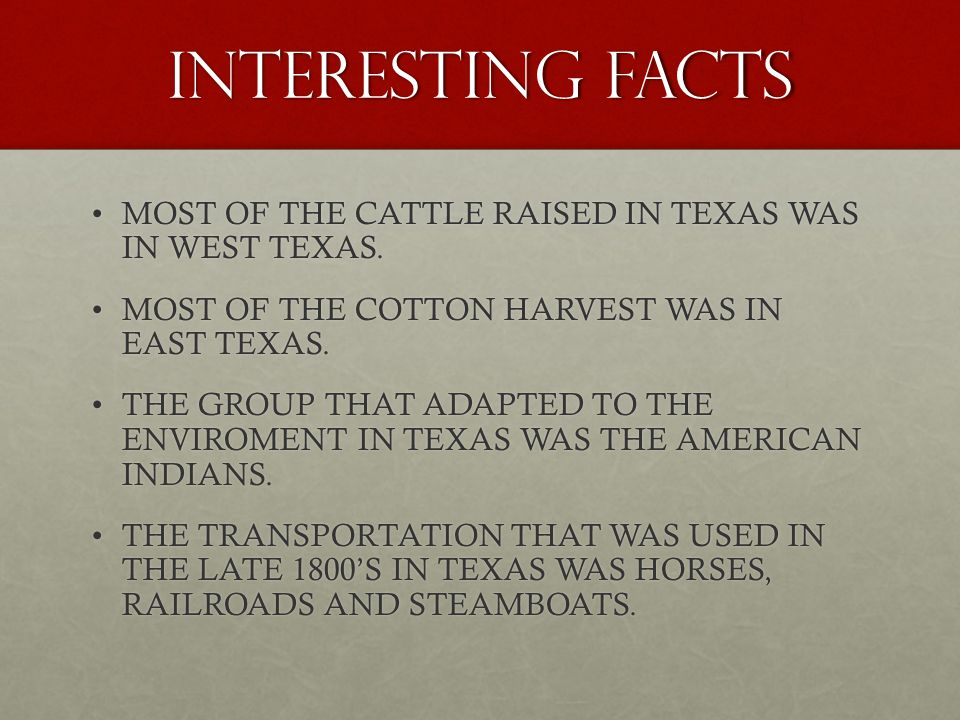 INTERESTING FACTS MOST OF THE CATTLE RAISED IN TEXAS WAS IN WEST TEXAS. MOST OF THE COTTON HARVEST WAS IN EAST TEXAS.