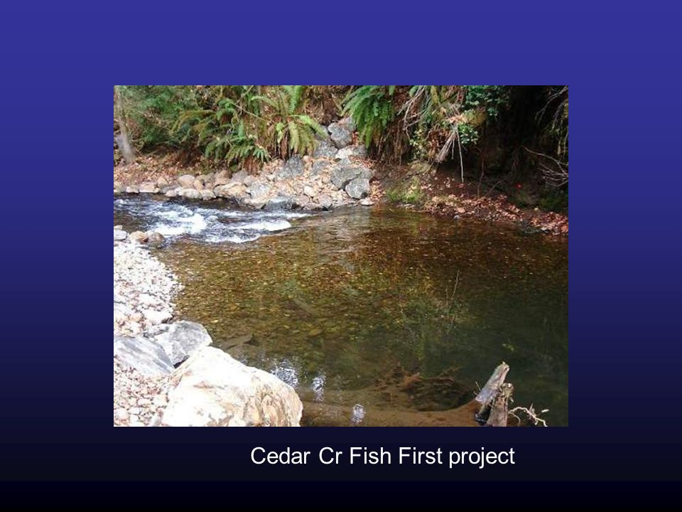 Cedar Cr Fish First project