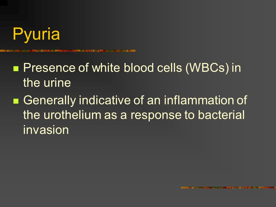 Pyuria Presence of white blood cells (WBCs) in the urine