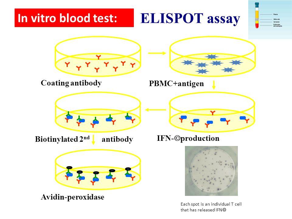 ELISPOT assay In vitro blood test: Coating antibody PBMC+antigen