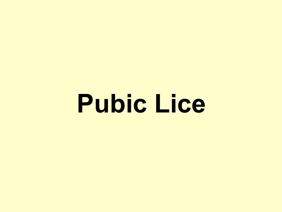 Pubic Lice