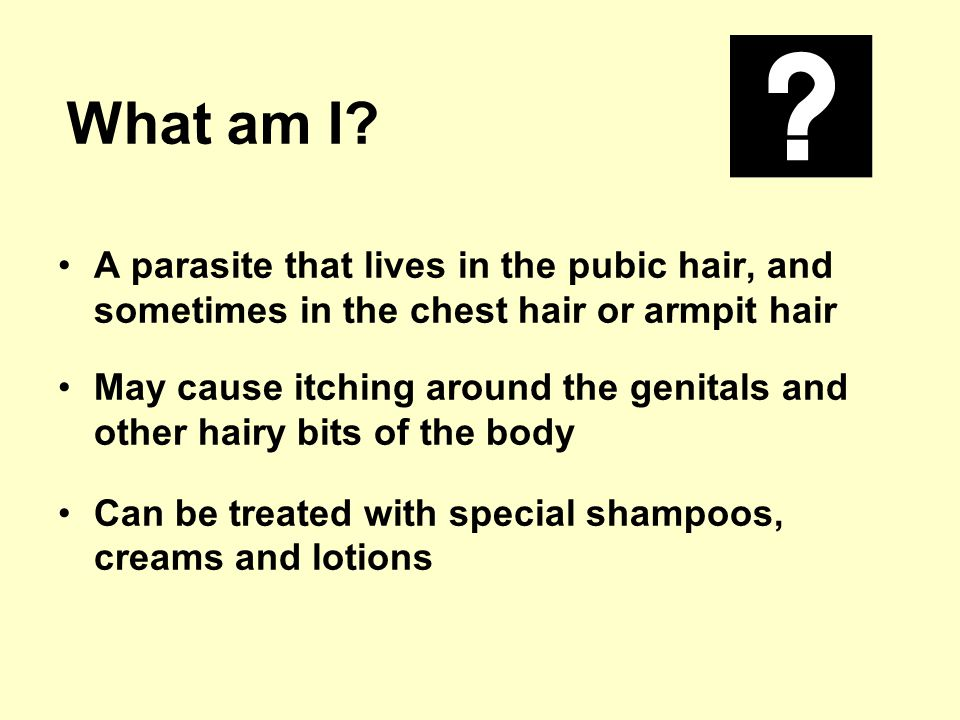 What am I A parasite that lives in the pubic hair, and sometimes in the chest hair or armpit hair.