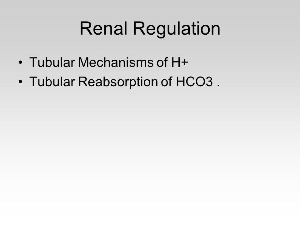 Renal Regulation Tubular Mechanisms of H+
