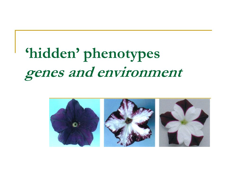 'hidden' phenotypes genes and environment