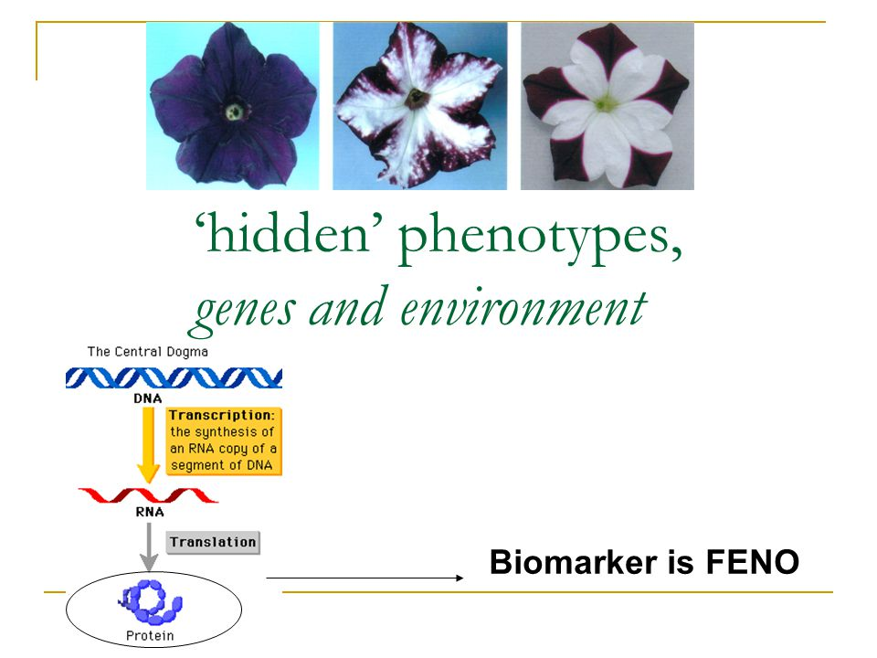 'hidden' phenotypes, genes and environment