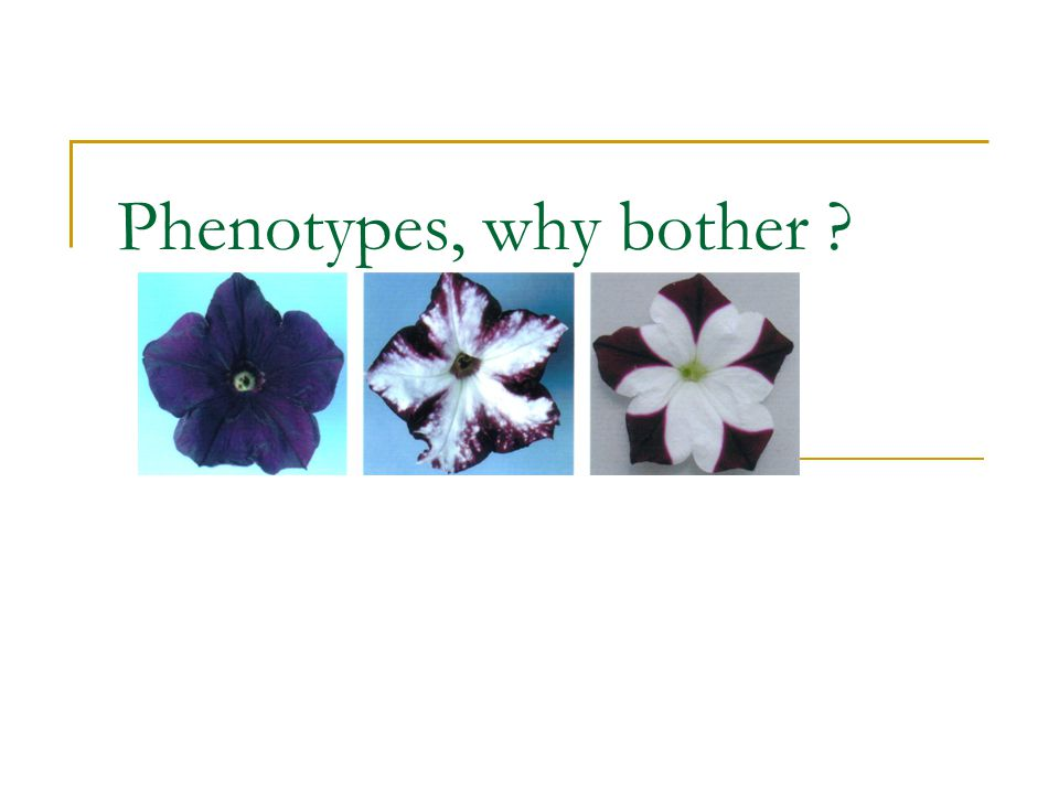 Phenotypes, why bother
