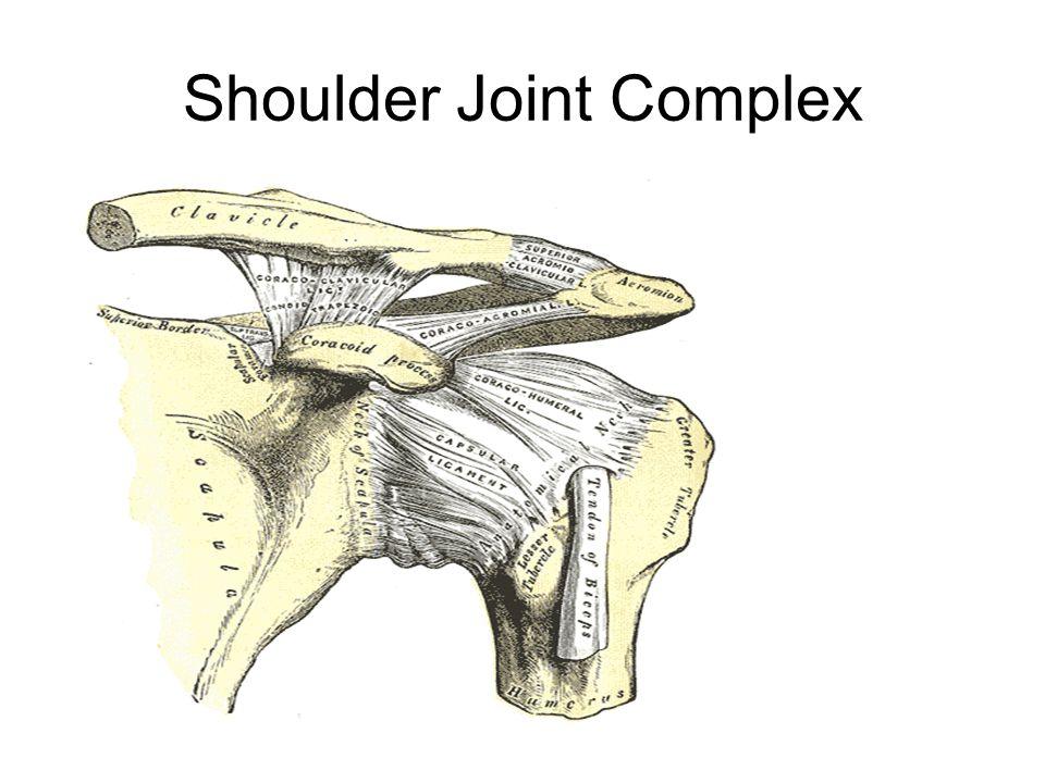 Shoulder Joint Complex