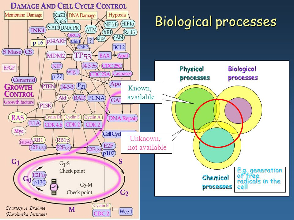 Biological processes Known, available Unknown, not available