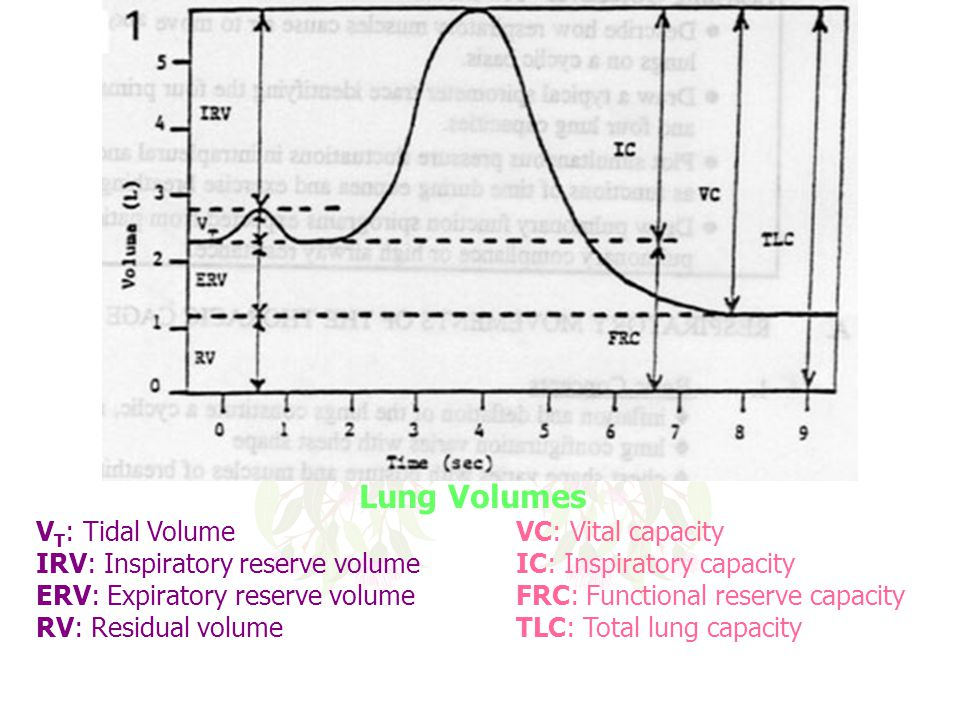Lung Volumes VT: Tidal Volume VC: Vital capacity