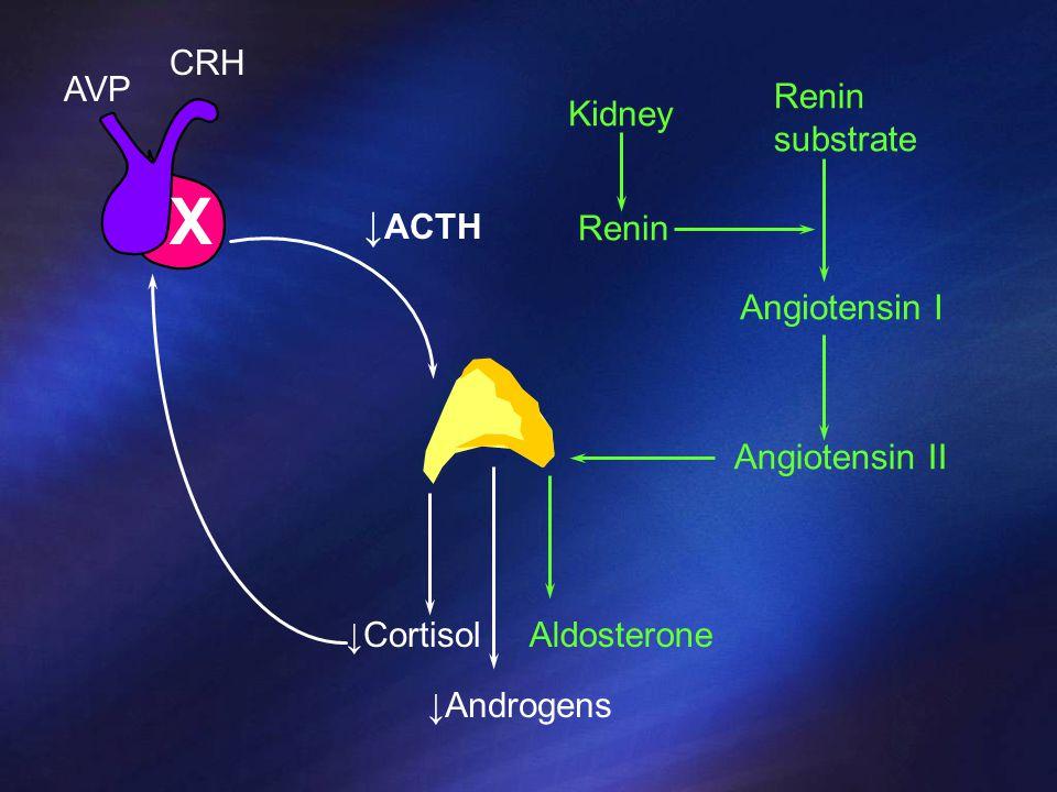 X ↓ACTH CRH AVP Renin substrate Kidney Renin Angiotensin I