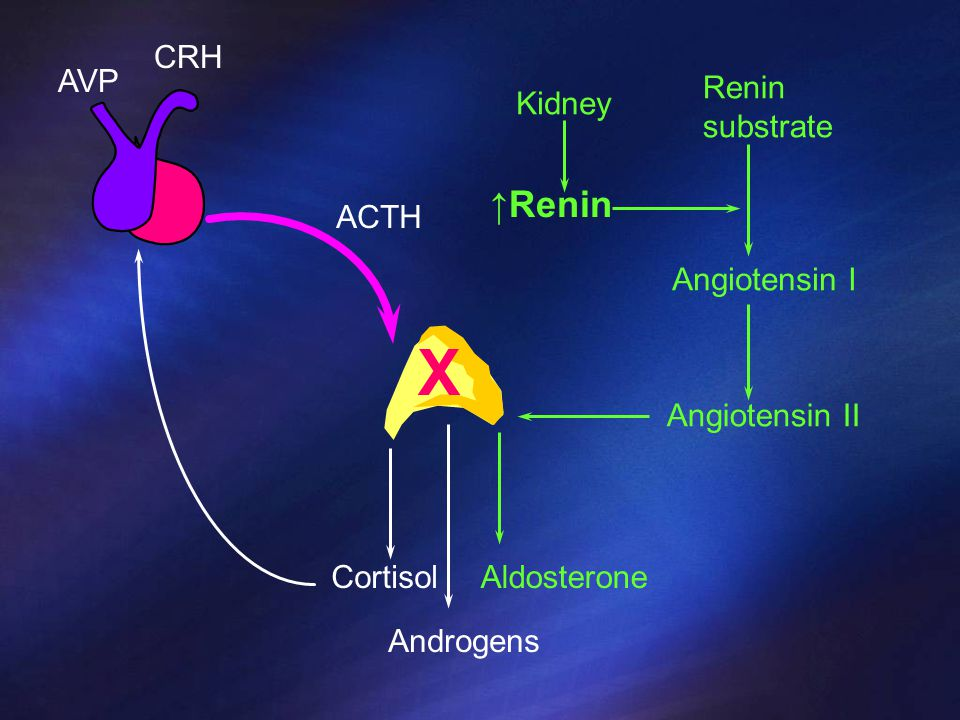 X ↑Renin CRH AVP Renin substrate Kidney ACTH Angiotensin I
