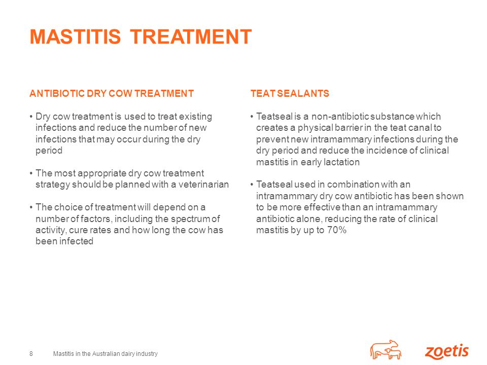 MASTITIS TREATMENT ANTIBIOTIC DRY COW TREATMENT
