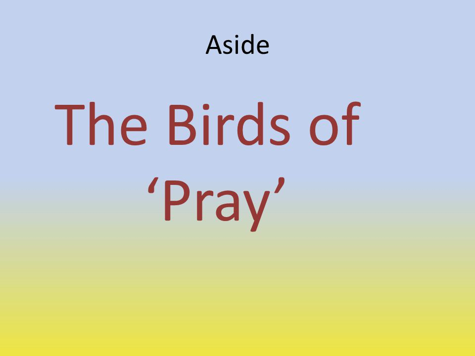 Aside The Birds of 'Pray'