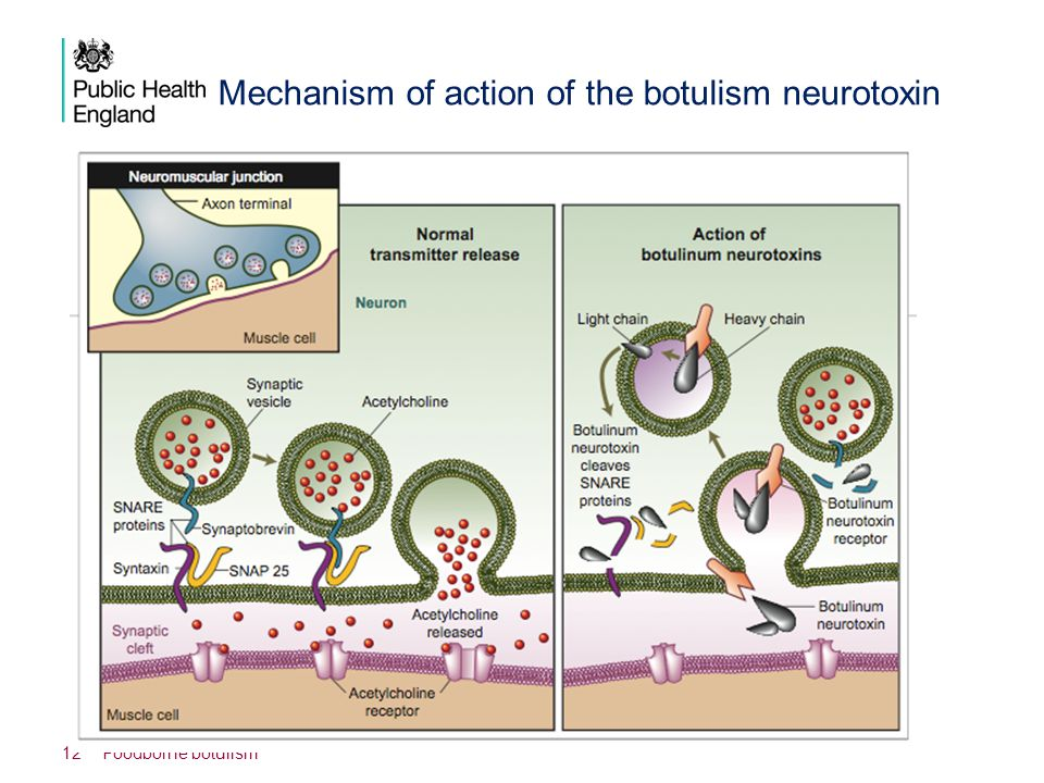 Mechanism of action of the botulism neurotoxin