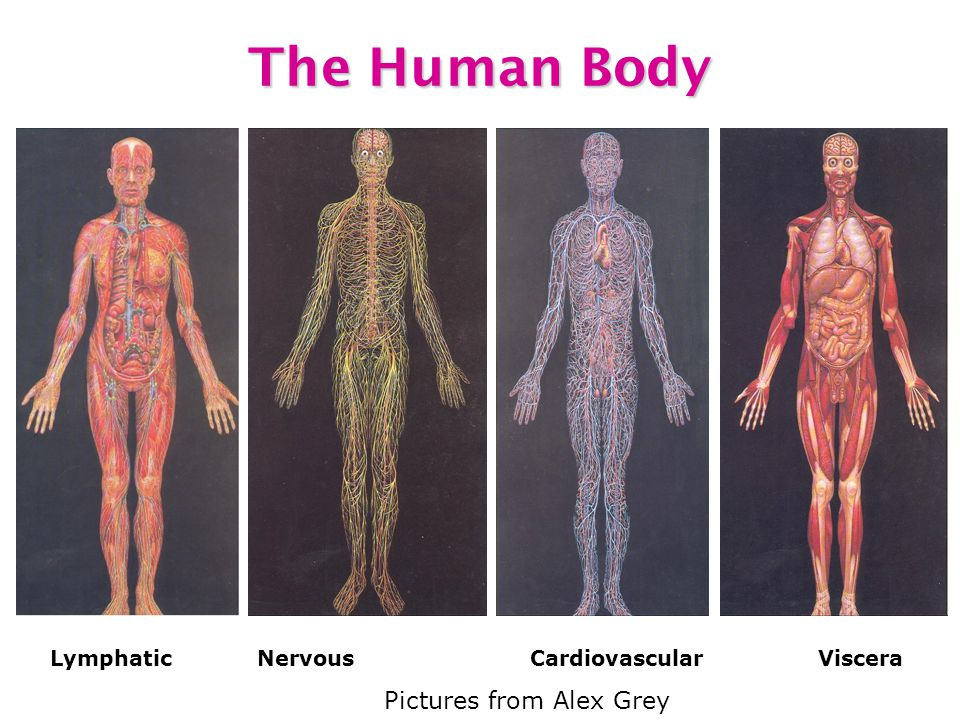 The Human Body Pictures from Alex Grey