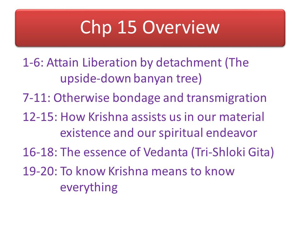 Chp 15 Overview